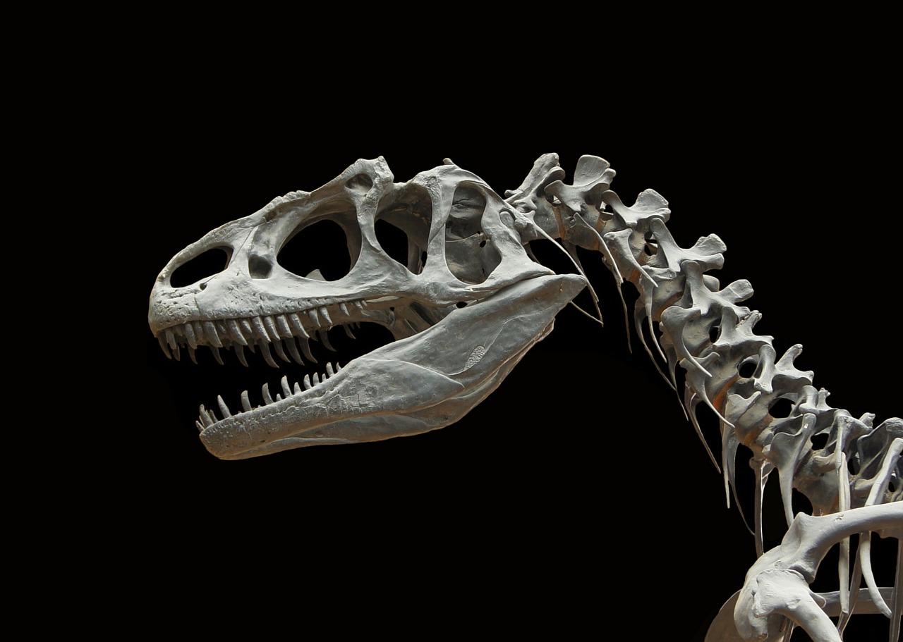 トンネルを抜けるとそこは恐竜の世界。日本最大級の恐竜博物館「福井県立恐竜博物館」