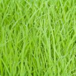ゴールデンウイークです。そろそろ田植えの季節です。